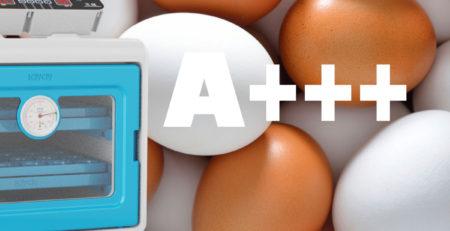 Kuluçkalık yumurta seçimi
