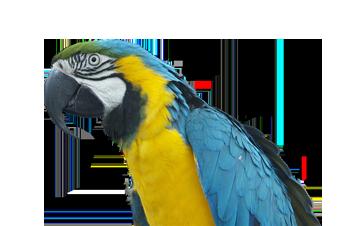 Kuluçka makinesi papağan