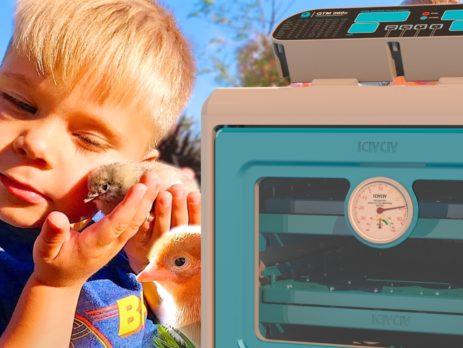 iCivciv Kuluçka Makinesi